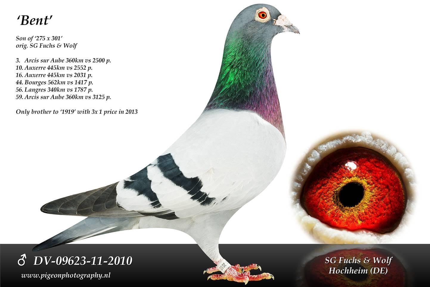 DV 09623 11 2010