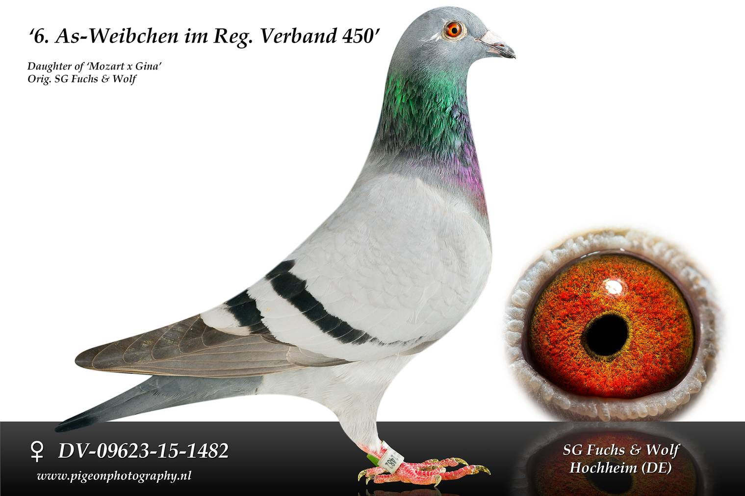 DV 09623 15 1482