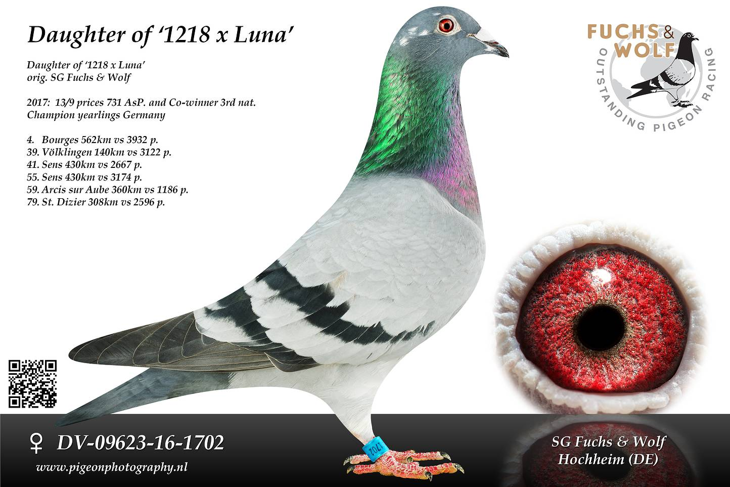 DV 09623 16 1702 main